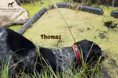 thomas_4