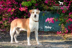 Toby IMG_0023-960