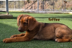 toffee_4