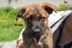 yoda_3