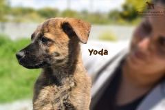 yoda_5