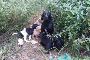 Hundemama mit ihren Welpen