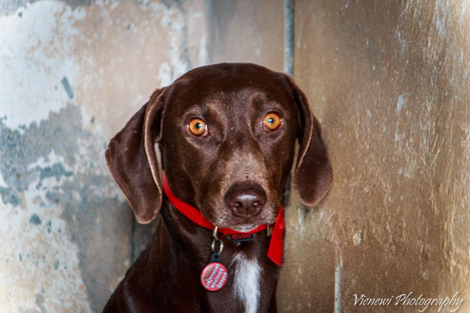 ♥ GRACE, Pointer-Mix, geb. ca. 2014 ♥