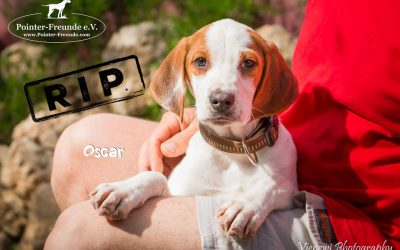 OSCAR, Pointer-Mix, 4 Monate