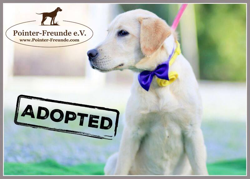 ♥ CHLOE, Labrador-Mädchen, ca. 5 Monate ♥