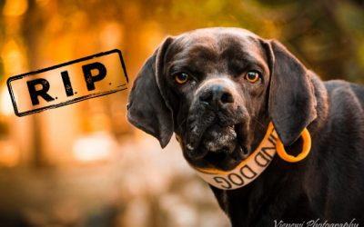 """♥ """"Special"""" MAX, Pointer-Mix, 3 years ♥"""