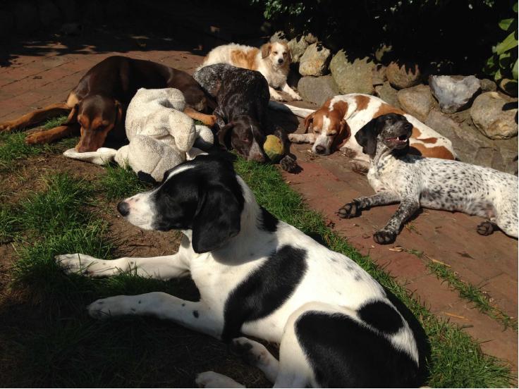 Sunbathing together in the garden