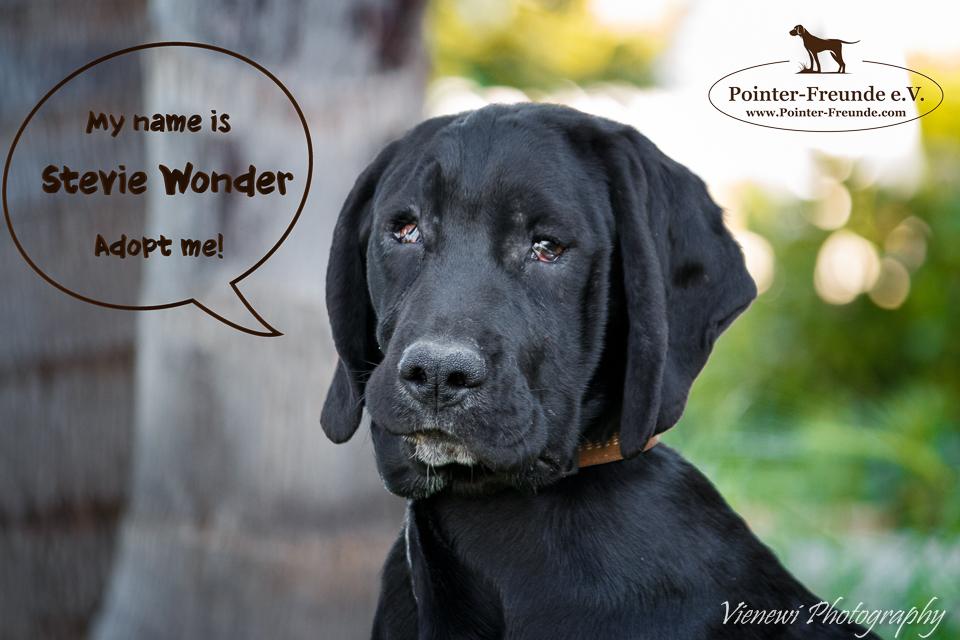 BESONDERER NOTFALL: STEVIE WONDER IST FAST BLIND!