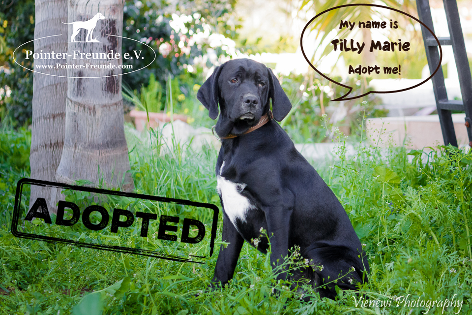TILLY MARIE, Pointer-Mix, appr. 09/2016