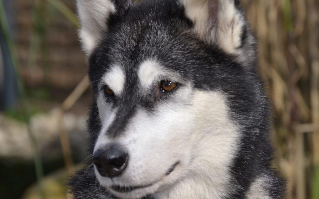 NIKITA – Tierliebe überschreitet Grenzen