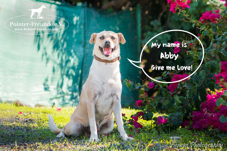ABBY, Pointer-Sharpei-Mix, geb. 09/2016