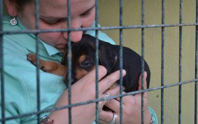 """Pledge A Brick"": Sponsorship Scheme for Dog Rescue Centre"