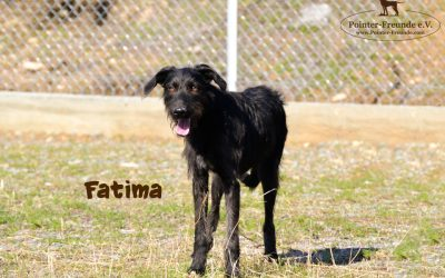 FATIMA, Pointer-Terrier, geb. 04/2018