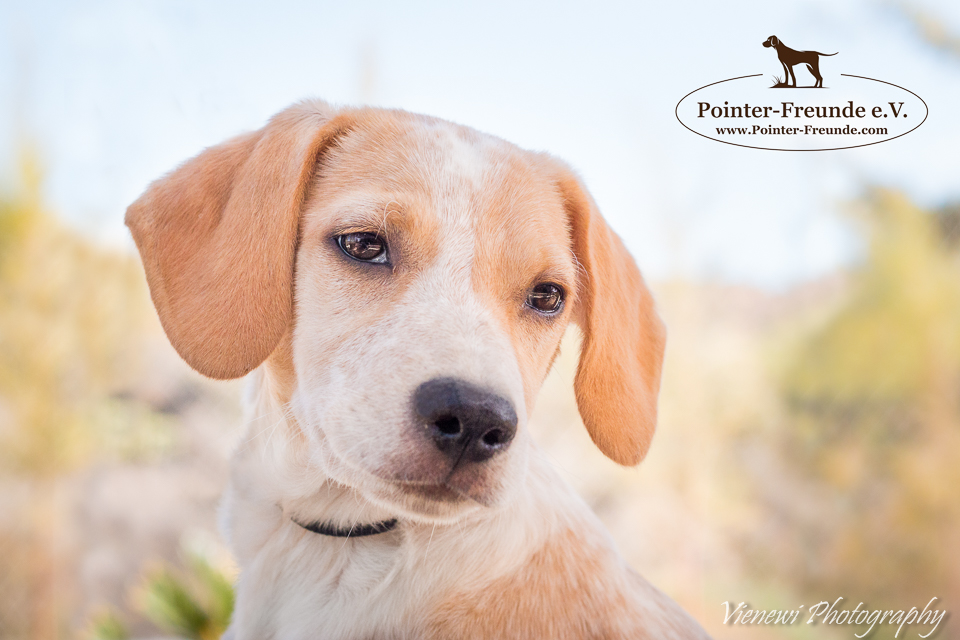 RESERVIERT: PORTHOS, Pocket-Pointer, geb. ca. 06/2016