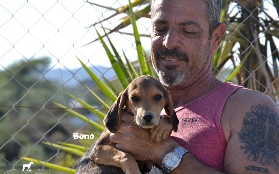 BONO, Pointer-Mix, born 06/2018