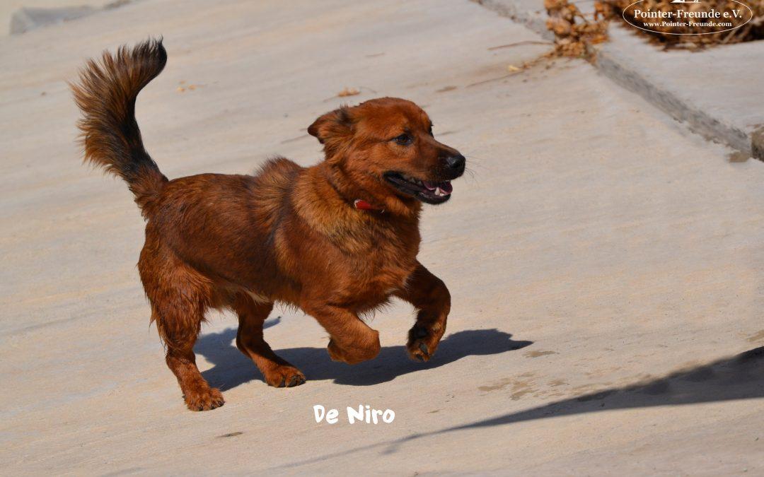 De Niro, Kokoni-Dachshound-Mix, born 2017