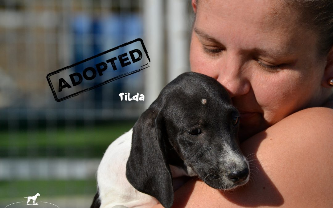 TILDA, Pointer-Mix, geb. 06/2018