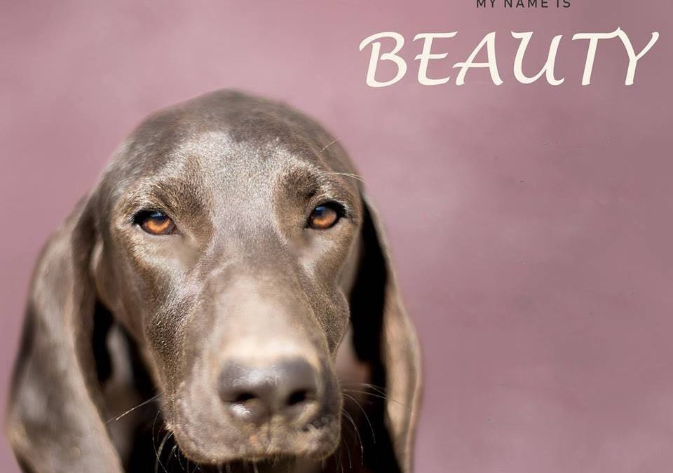 BEAUTY, Pointer-Mix, geb. 2017