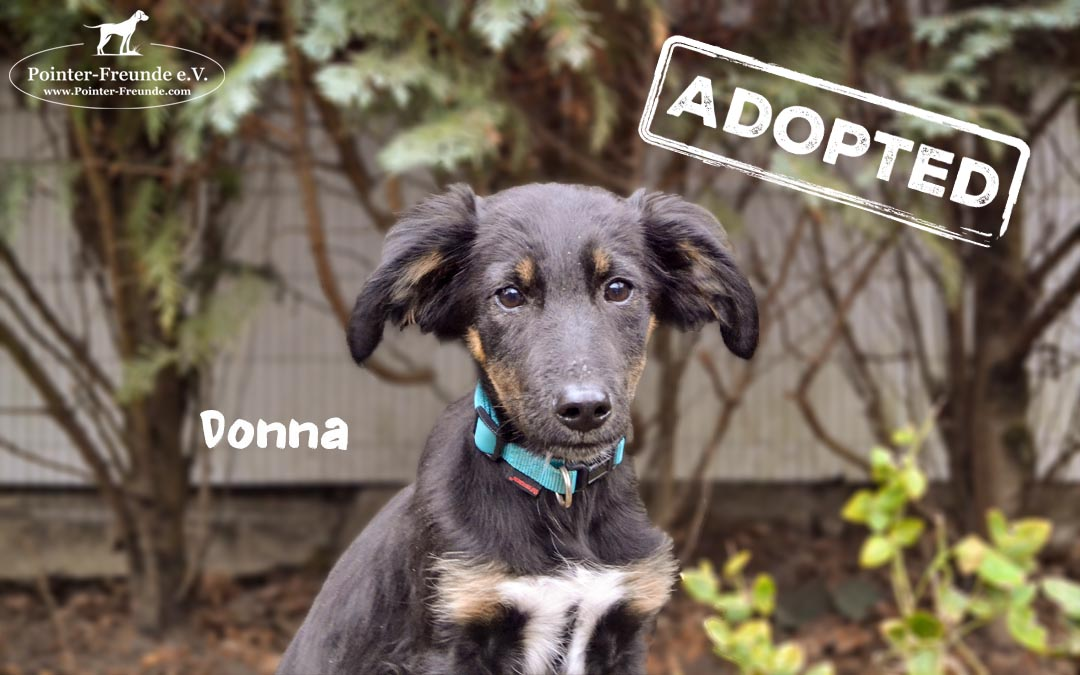(Deutsch) DONNA, Kokoni-Terrier-Mix, geb. 10/2018