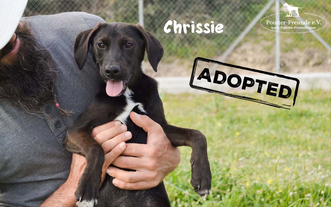 CHRISSIE, Pointer-Mix, geb. 10/2018