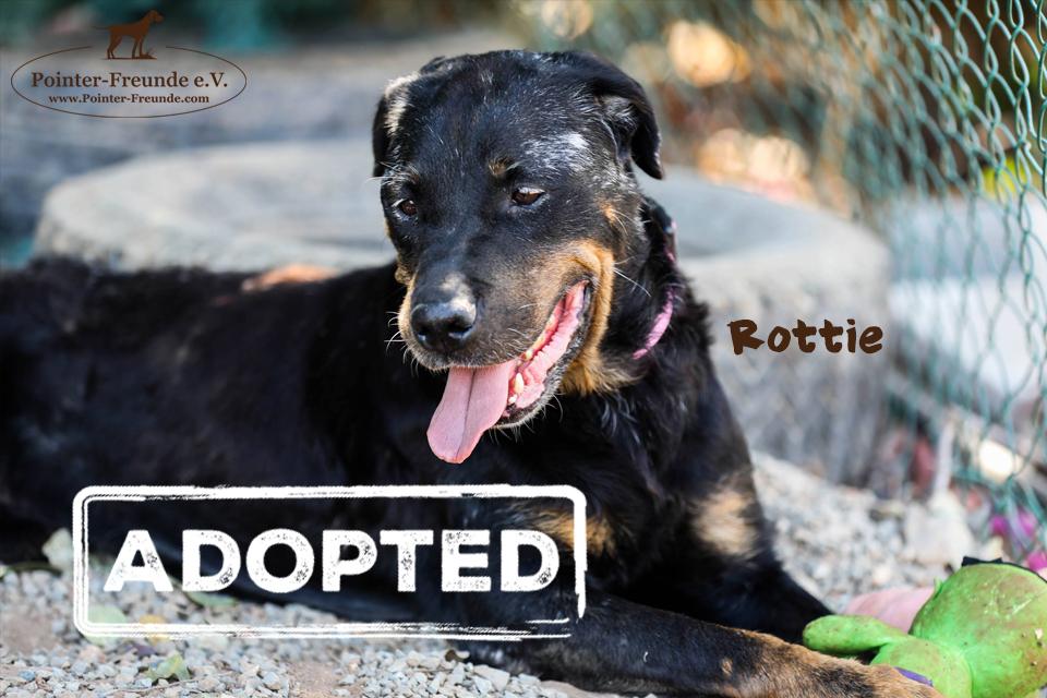 ROTTIE, Rottweiler, geb. 2011