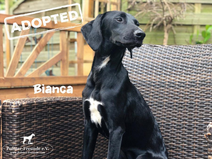 BIANCA, Pointer-Mix, geb. 10/2018