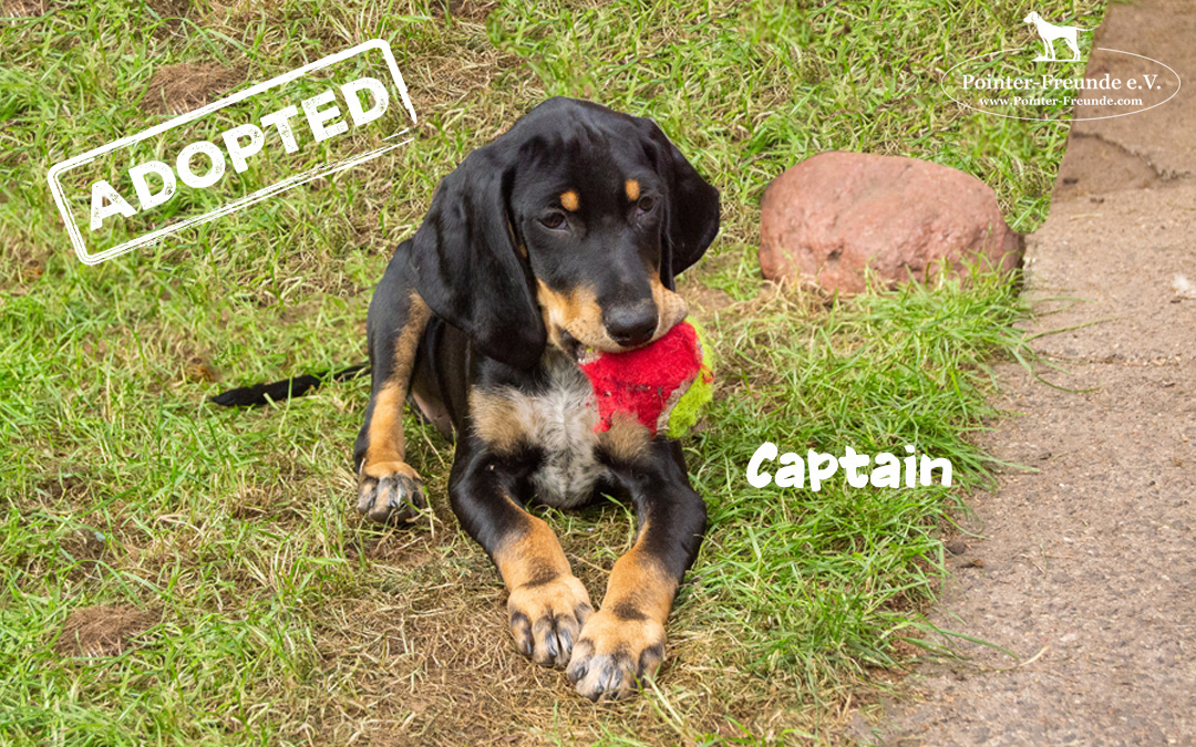 CAPTAIN, Jura-Mix, geb. 04.2019