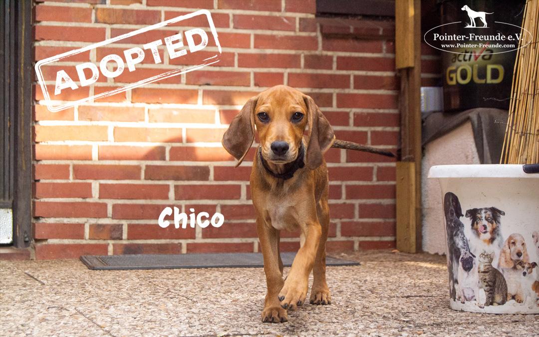 (Deutsch) CHICO, Jura-Mix, geb. 04.2019