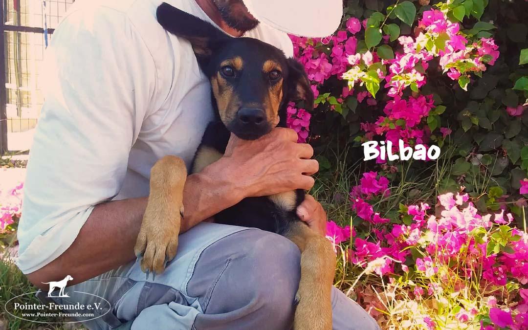 BILBAO, German shepherd mix, born. 03/2019