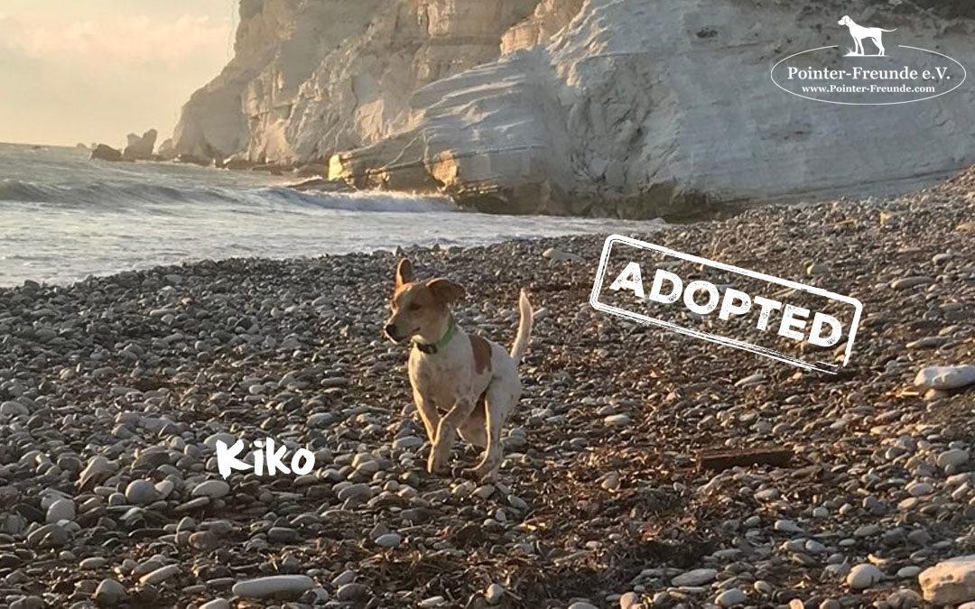 KIKO, Pocket Pointer, appr. 7 months